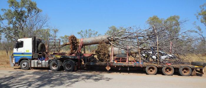 carbon-gold-qatar-transporting